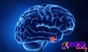 Какие функции выполняет пролактин