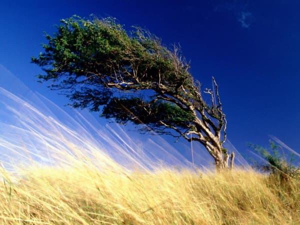 Налетели ветры злые...
