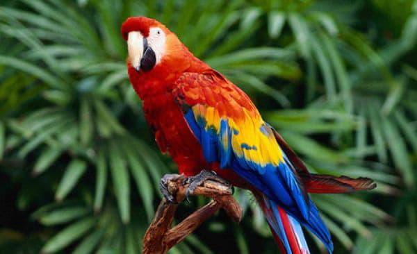 Попугаи какаду и их особенности