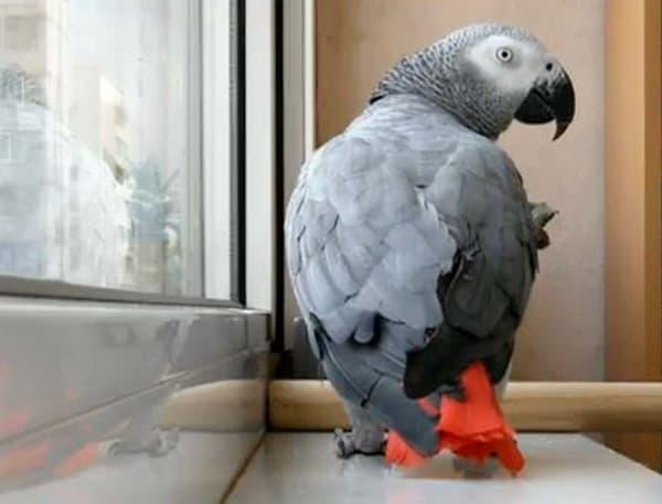 Попугаи жако и их особенности