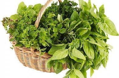 Пряные травы лучше антибиотиков