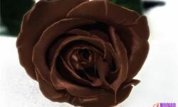 Шоколад – лекарство от кашля